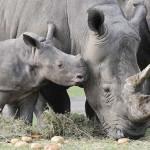 Parque Serengeti, visita entre animales