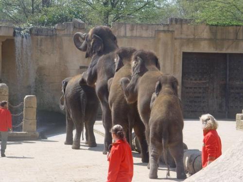 Zoologico de Hanover