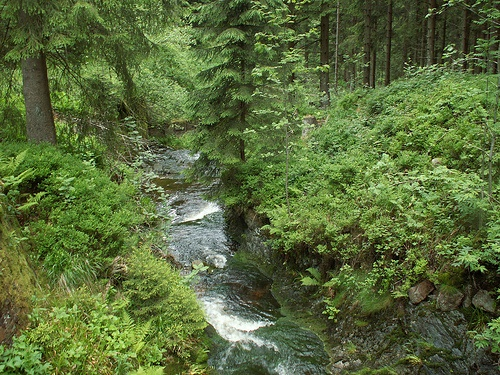 Montañas Harz