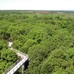 Bosques nativos en el Parque Hainich