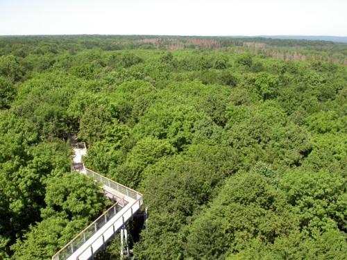 Parque Nacional Hainich