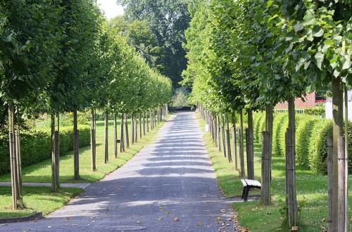 Jardin Botanico de Kassel