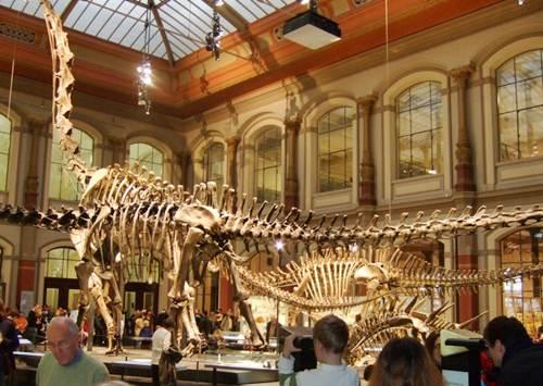 Museo Historia Natural en Berlin
