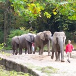 El hermoso Zoo de Wuppertal