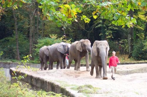 Zoo de Wuppertal