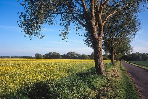 Campos en los alrededores de Hanover