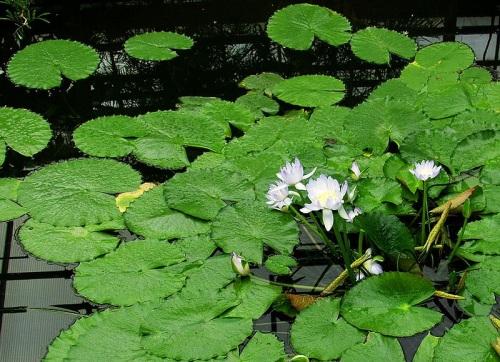 Plantas en el Jardin Botanico