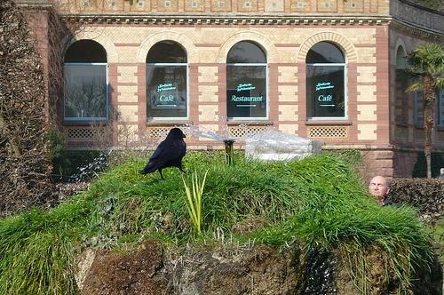 Pajaro en el Jardin Botanico de Karlsruhe
