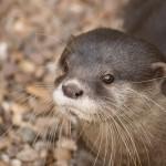 Animales, atracciones y jardines en Luisenpark
