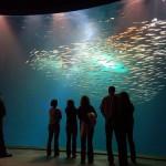 Ozeaneum, mundo marino en Stralsund