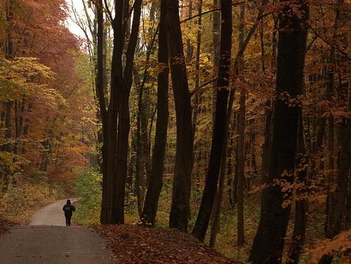 Naturaleza en Baden Baden