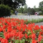Rheinpark, parque más bello de Colonia