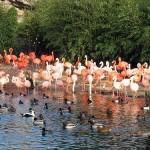 Tierpark Hagenbeck, oasis animal en Hamburgo