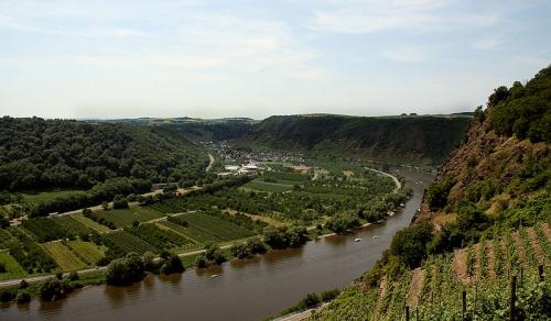 Viñedos en el Valle del rio Mosela
