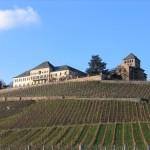 Aprender sobre los vinos de Rheingau