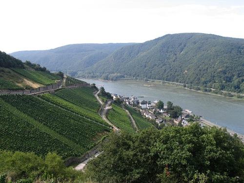 Viñedos en Rheingau