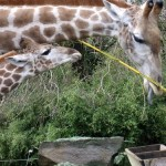 Zoológico de Dortmund, armonía de flora y fauna