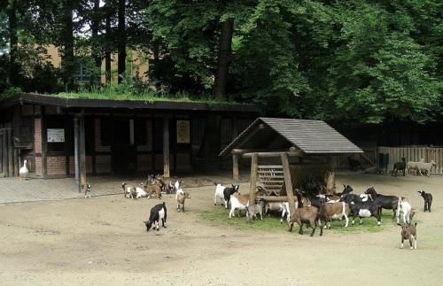 Zoologico de Dortmund